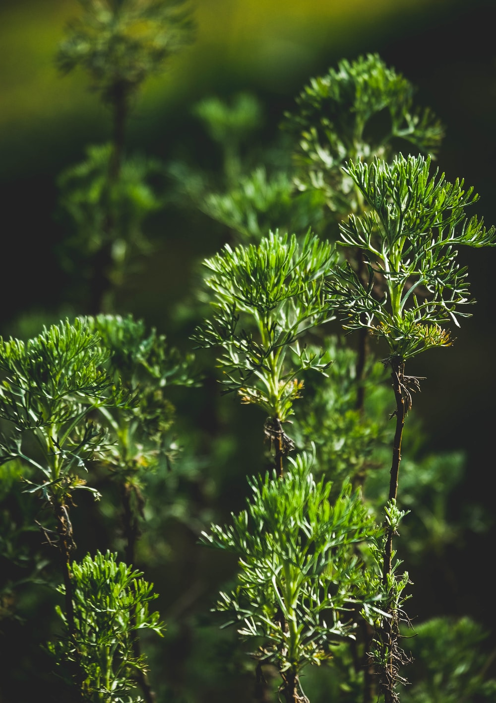 green plant in close up photography