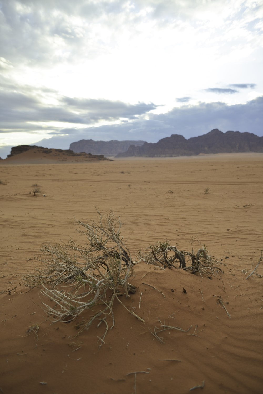leafless tree on brown sand