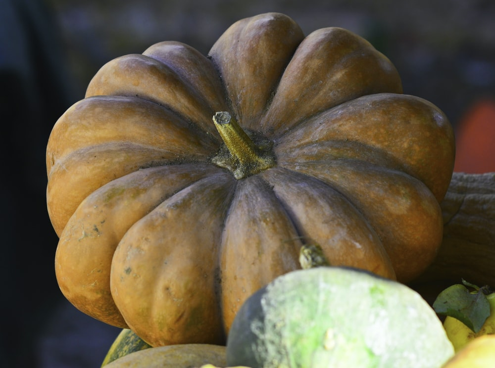 green and orange pumpkin in close up photography
