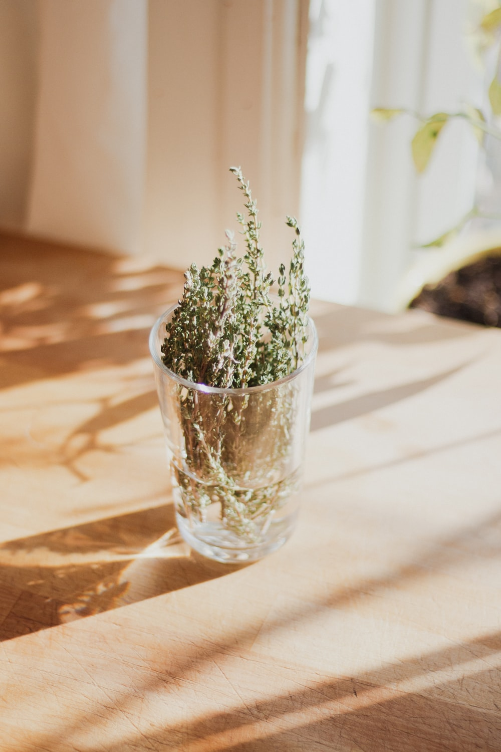 green plant in clear glass vase