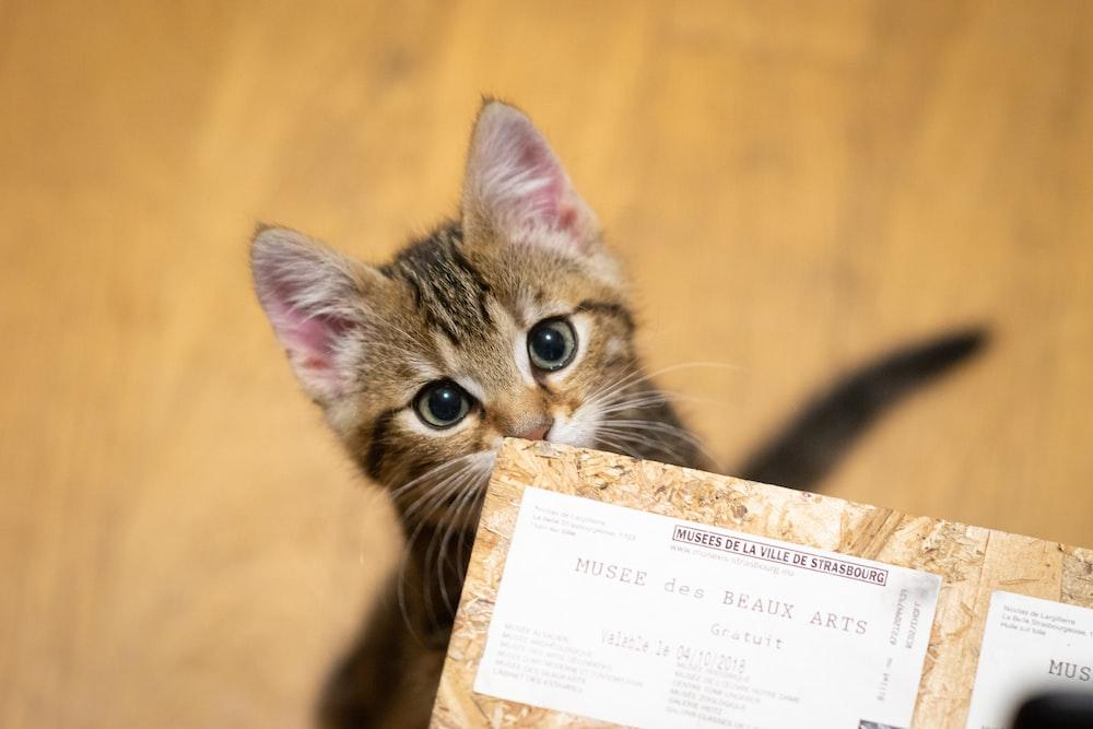 brown tabby kitten on brown cardboard box