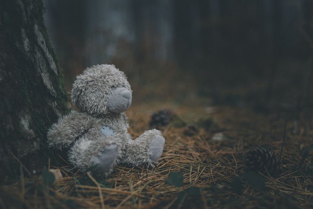 gray bear plush toy on brown dried leaves