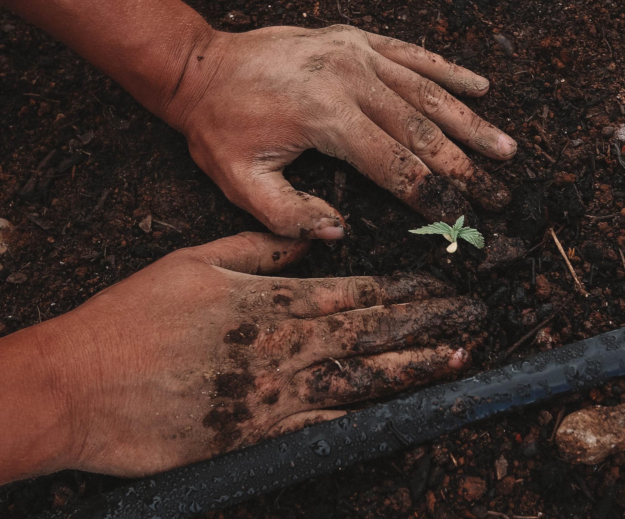 Hemp planting at farm | greenforcestaffing.com