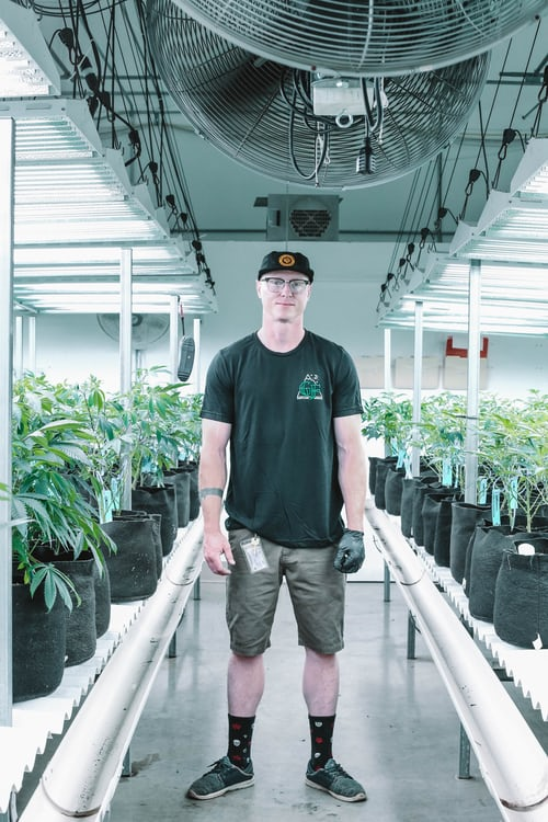 4 Ways Technology is Shaping Cannabis Growing Process 6