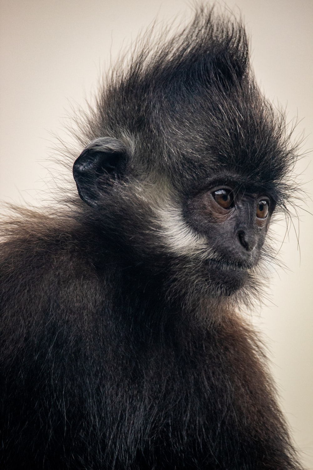 black and brown monkey on brown wooden surface