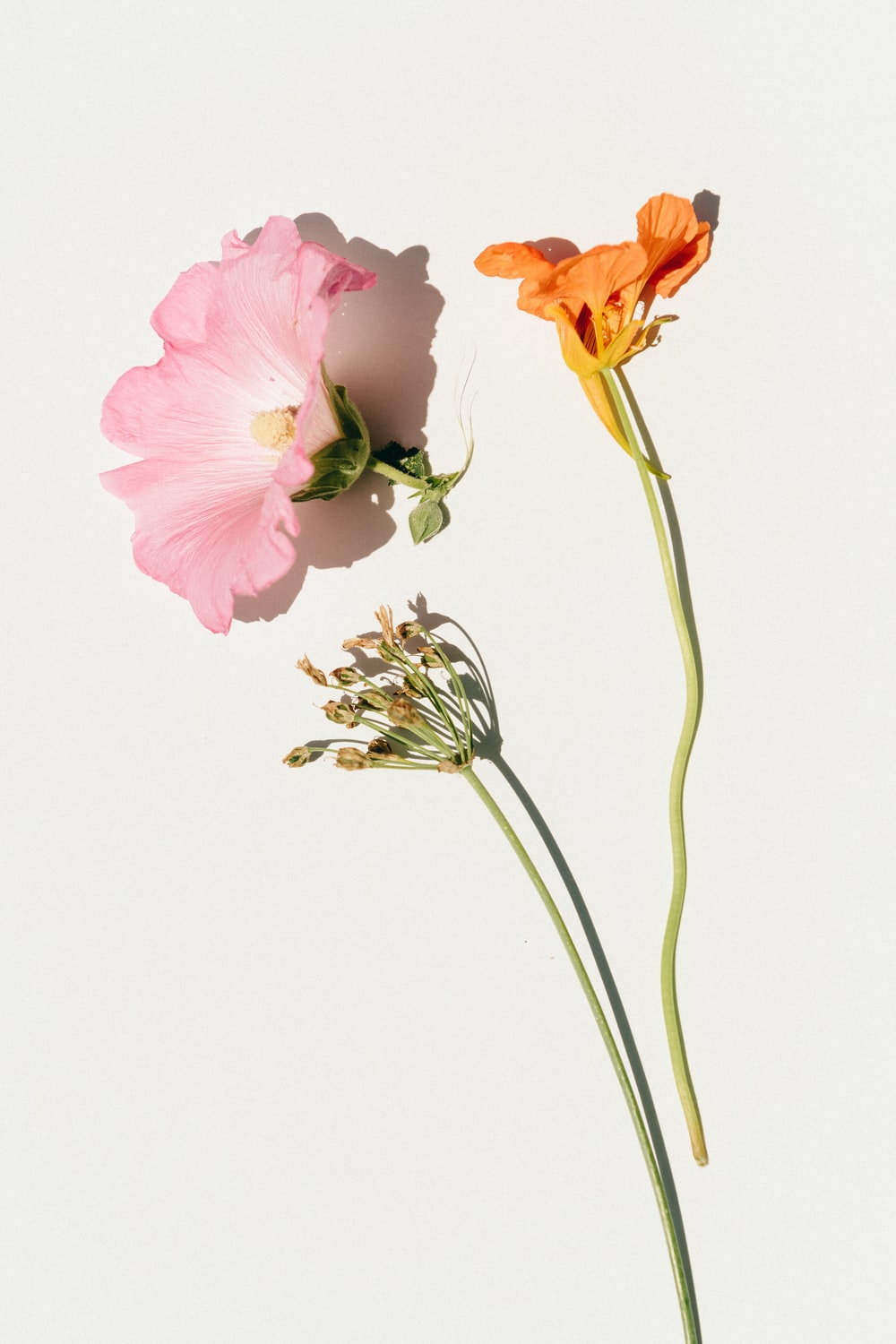 pink and yellow flowers on white background