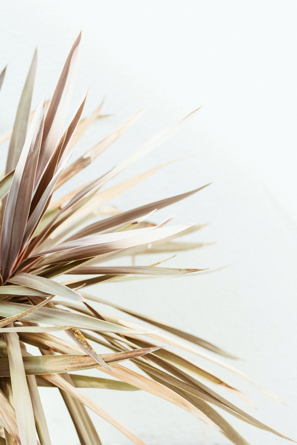 white and brown plant on white background