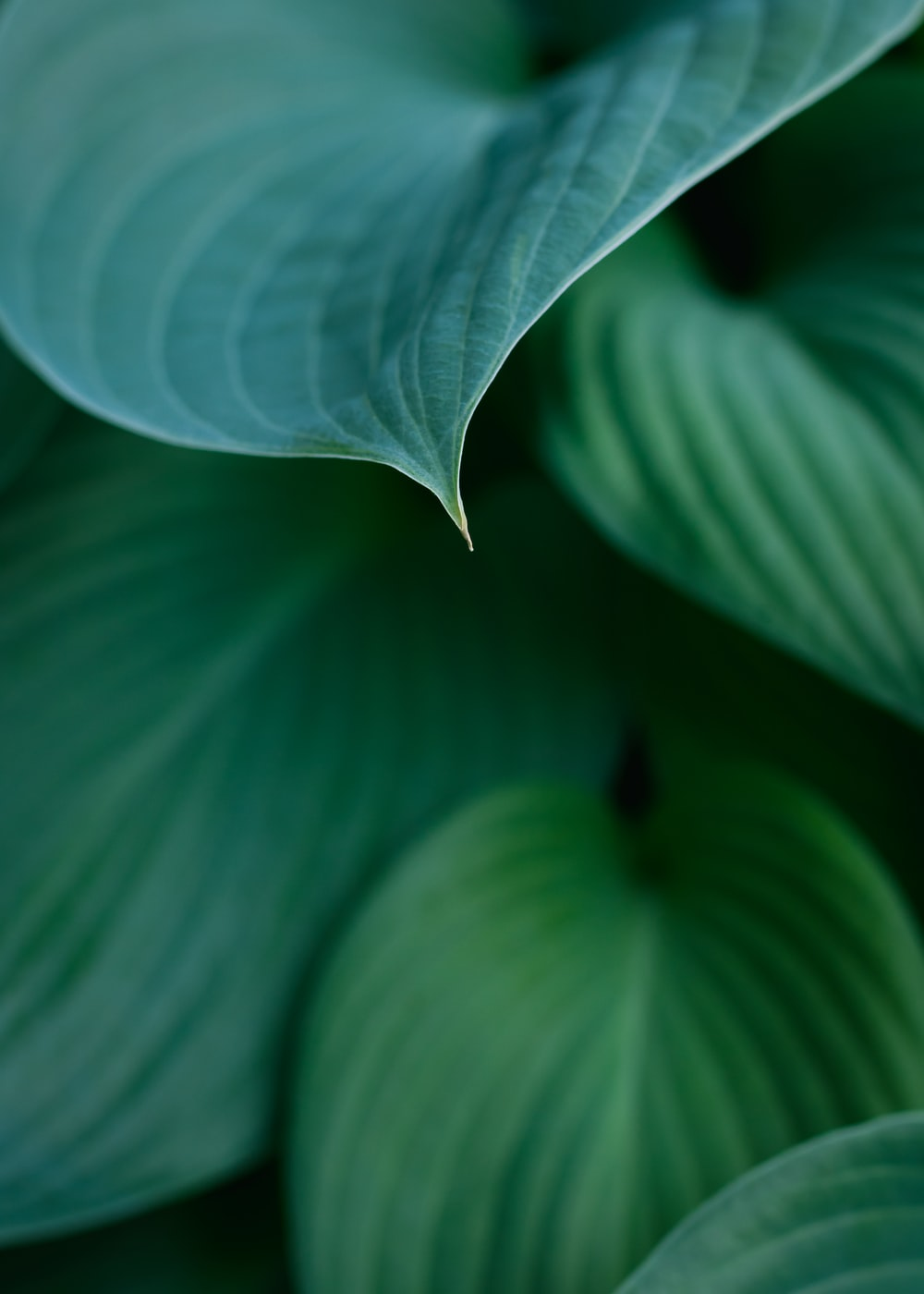 white leaf in close up photography