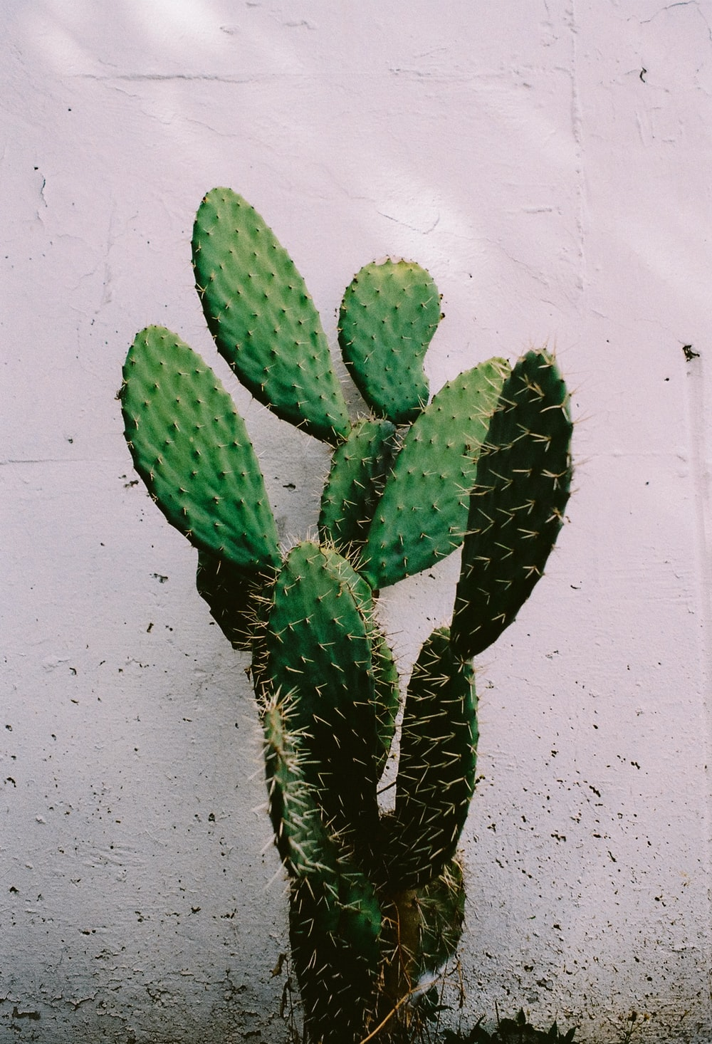 green cactus plant on white wall