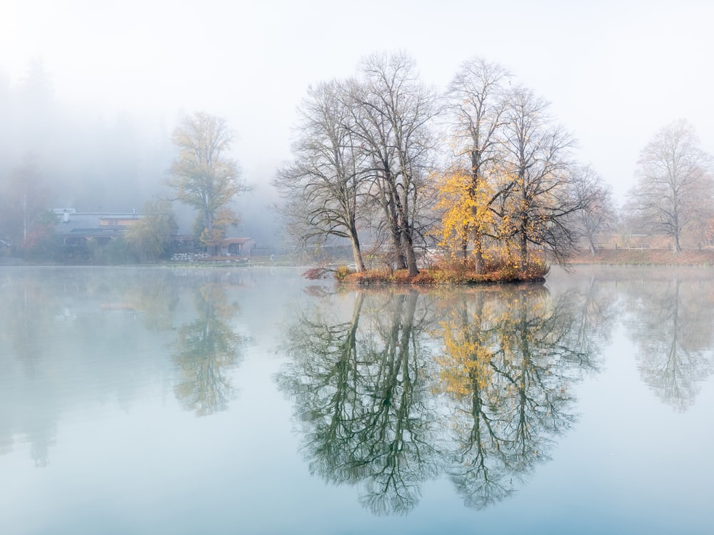 brown trees on body of water during daytime