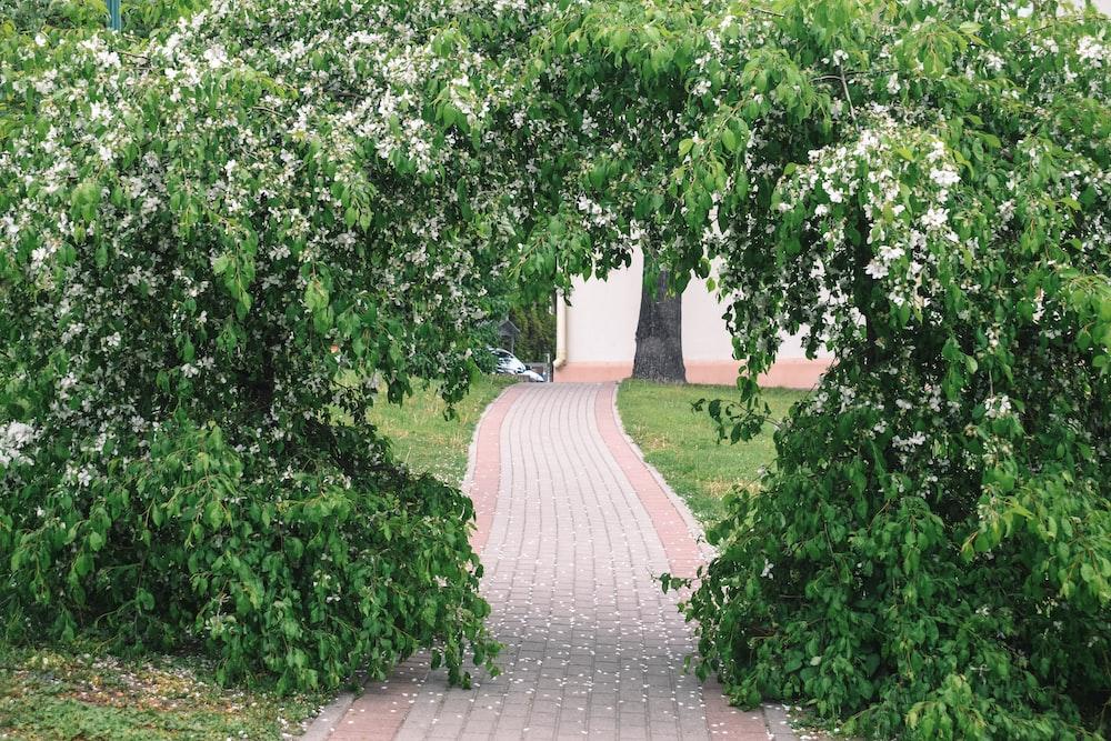green trees near brown brick pathway