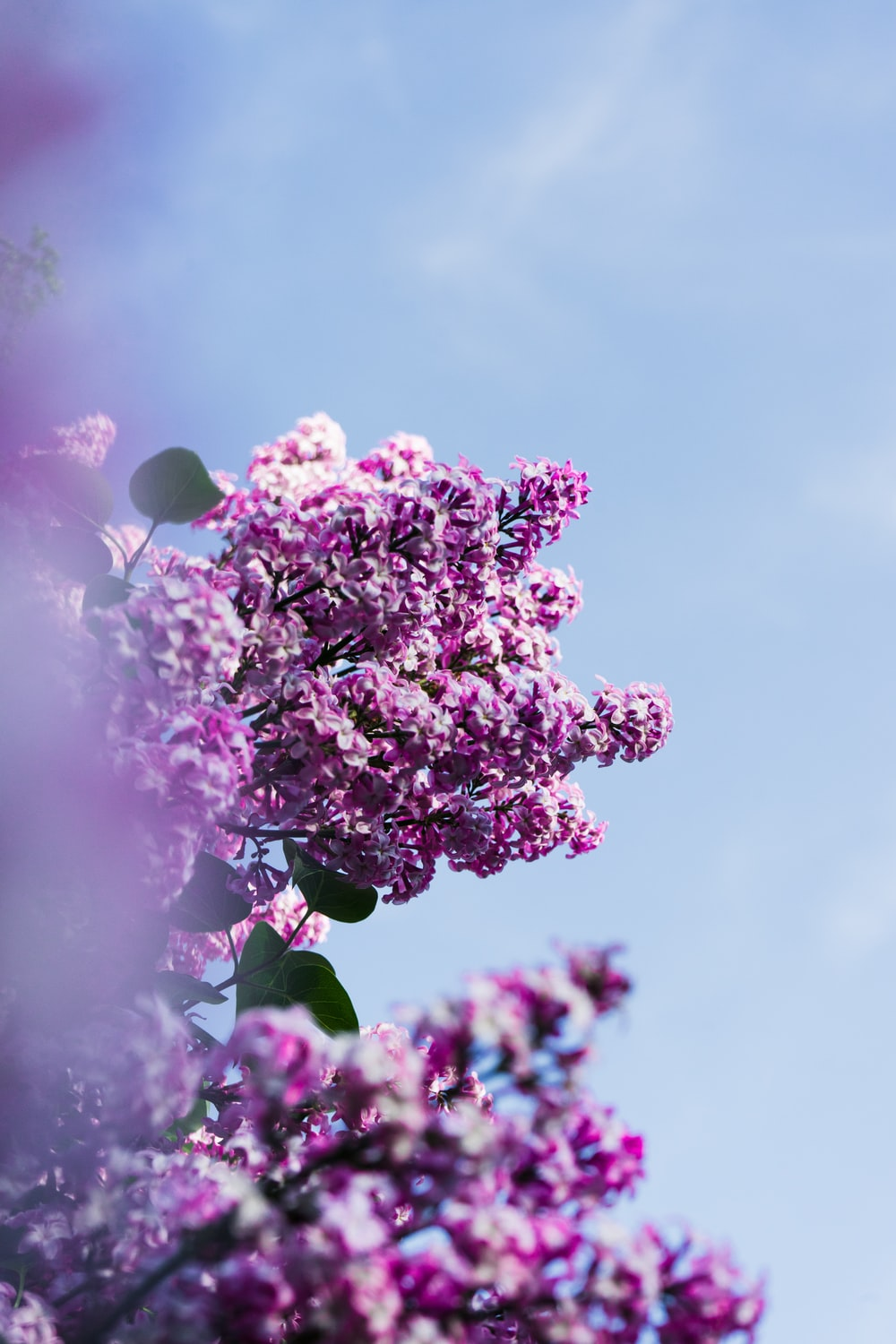 purple flowers under cloudy sky during daytime