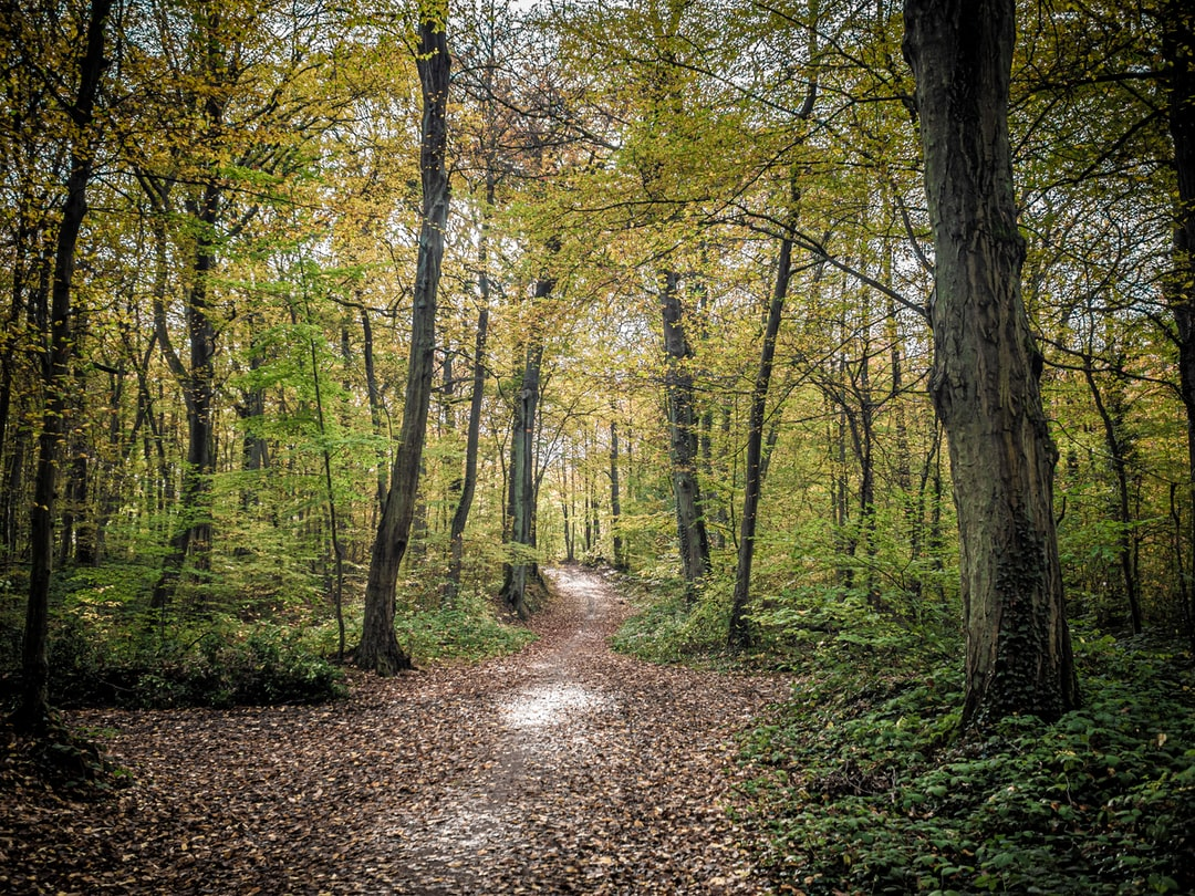Deep calm forest