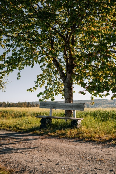 Wooden bench under a tree in the sunset