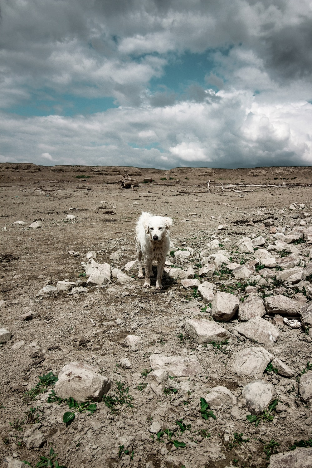white long coat small dog on gray rocky field under blue and white cloudy sky during