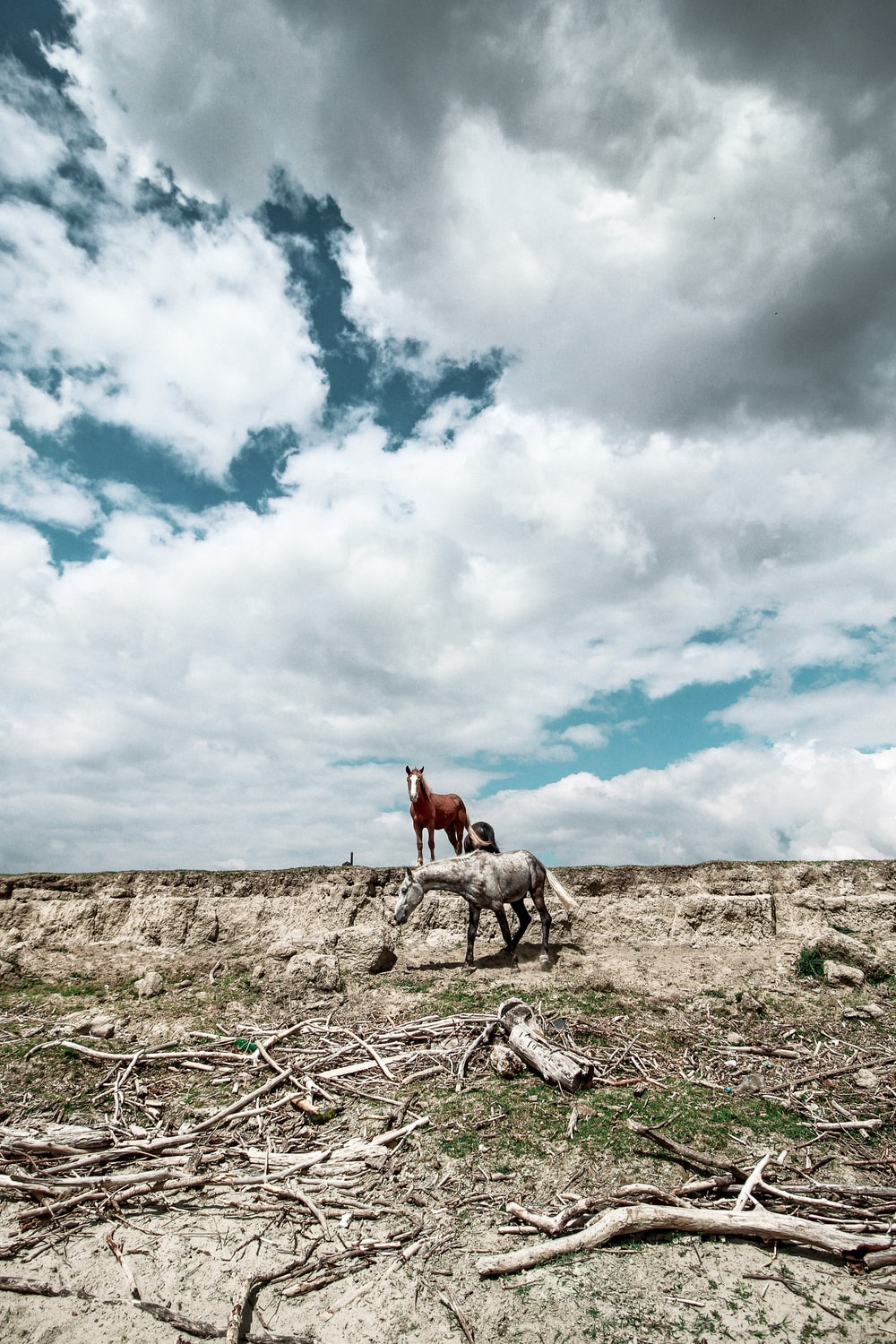 brown horse on brown field under white clouds and blue sky during daytime