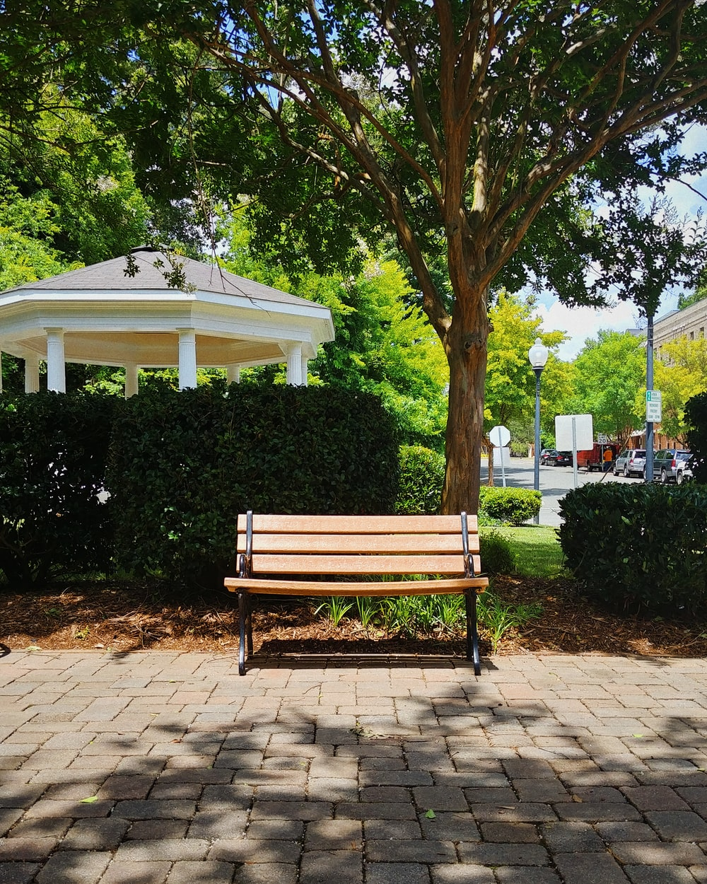 brown wooden bench under green tree
