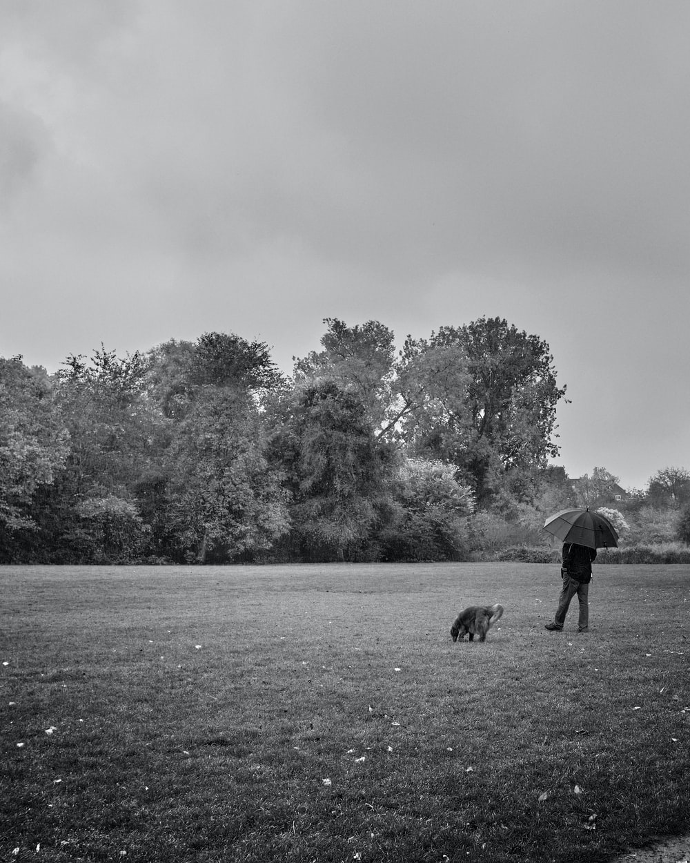 grayscale photo of 2 dogs on grass field near trees