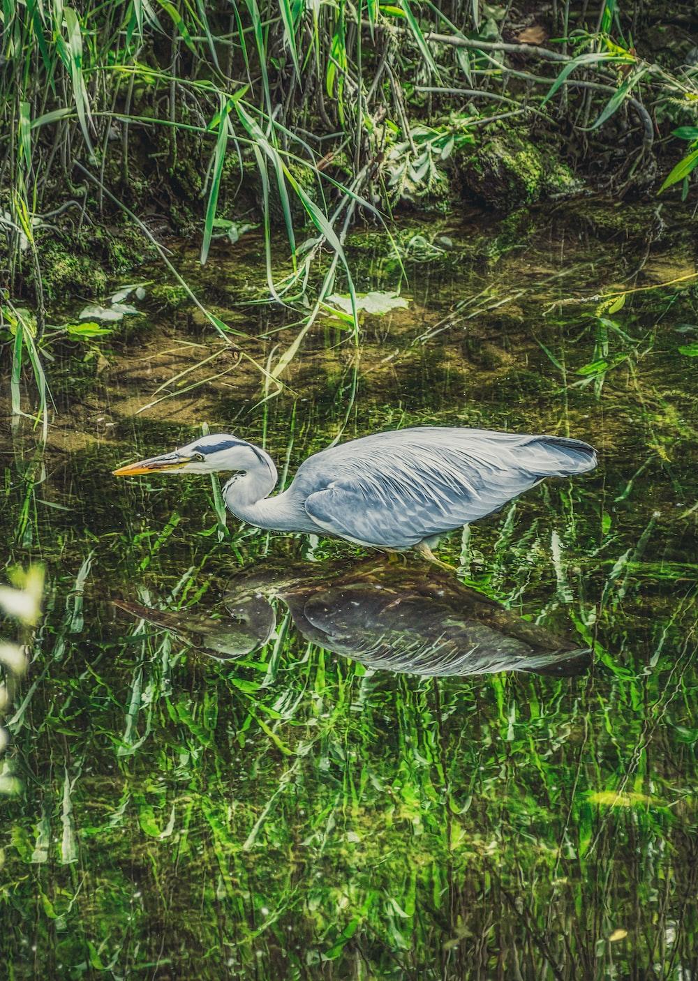 grey bird on water during daytime