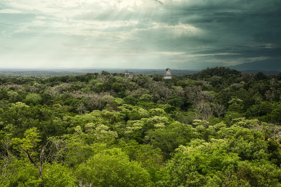 Panoramic view of Tikal National Park Peten from Temple IV
