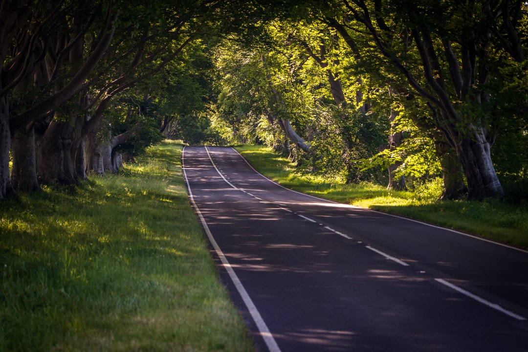 One of the most scenic roads in Dorset, near Badbury Rings and lined with trees.  Beautiful at any time of the year, however moreso, when the trees are in full blossom with leaves.