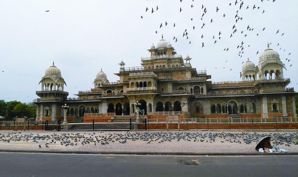 flock of birds flying over beige concrete building during daytime