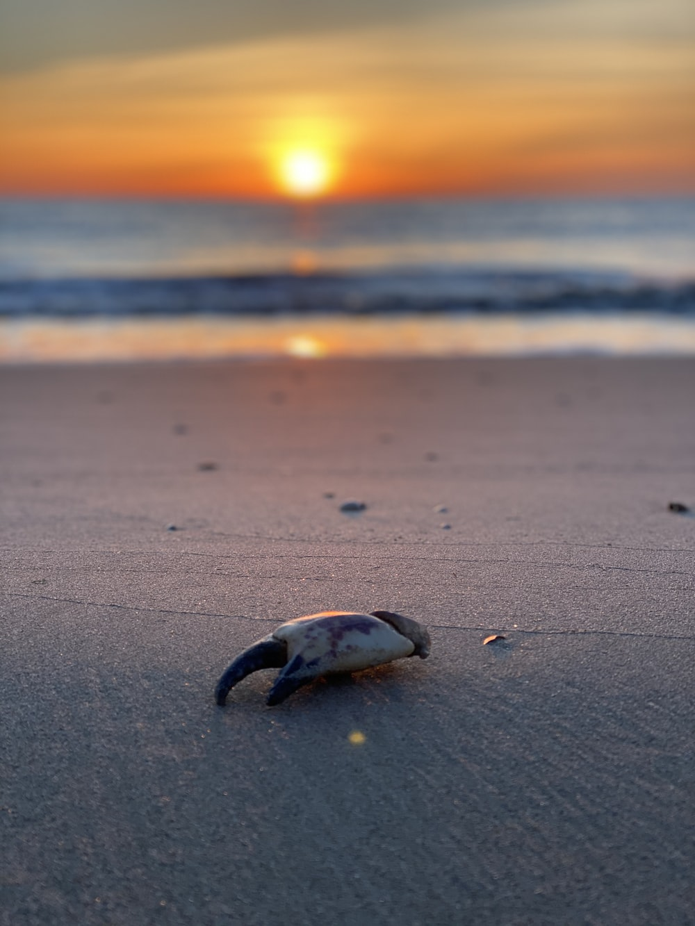 white and black sea shell on beach during sunset
