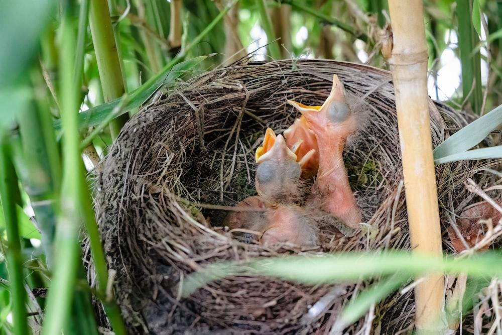 brown bird on nest during daytime