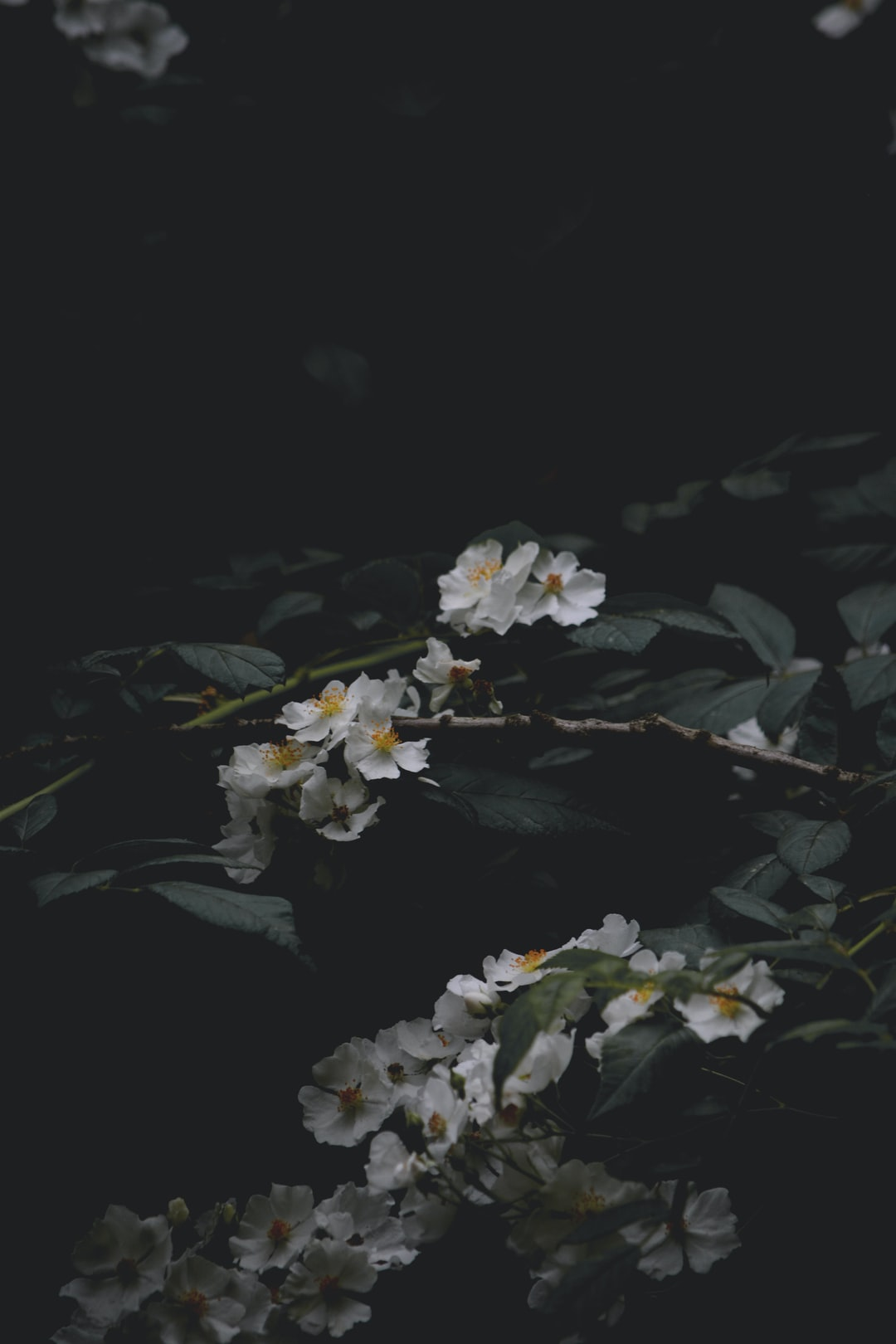 Moody Floral at Dusk