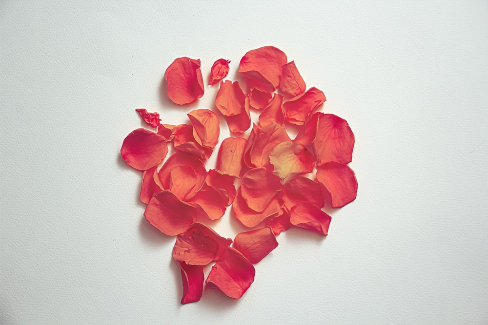 red flower petals on white surface