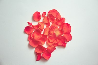 red flower petals on white surface petal zoom background