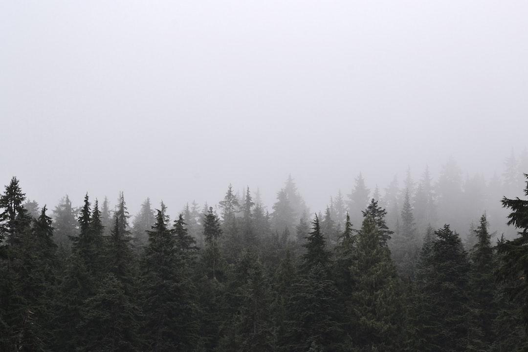 Green Pine Trees Under White Sky - unsplash