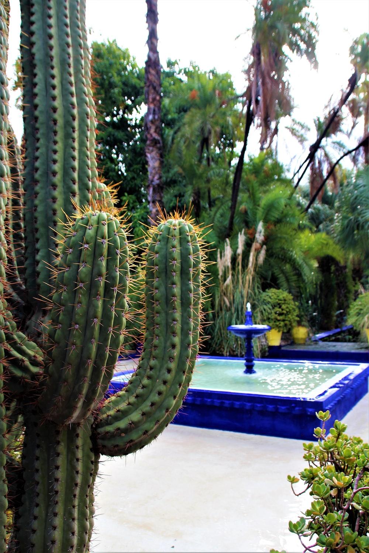 green cactus plant on black pot