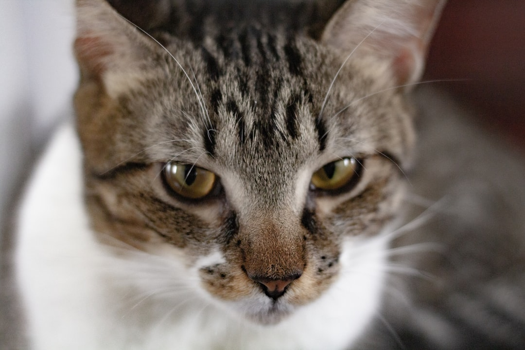 #cat #gato #portrait #retrato #daylight #dia #indoor