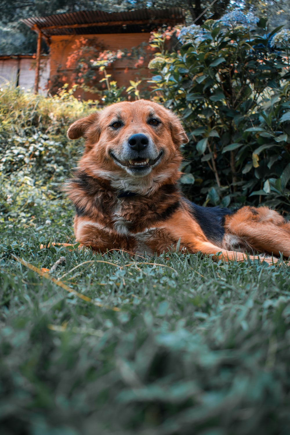 brown and black short coated dog lying on green grass during daytime