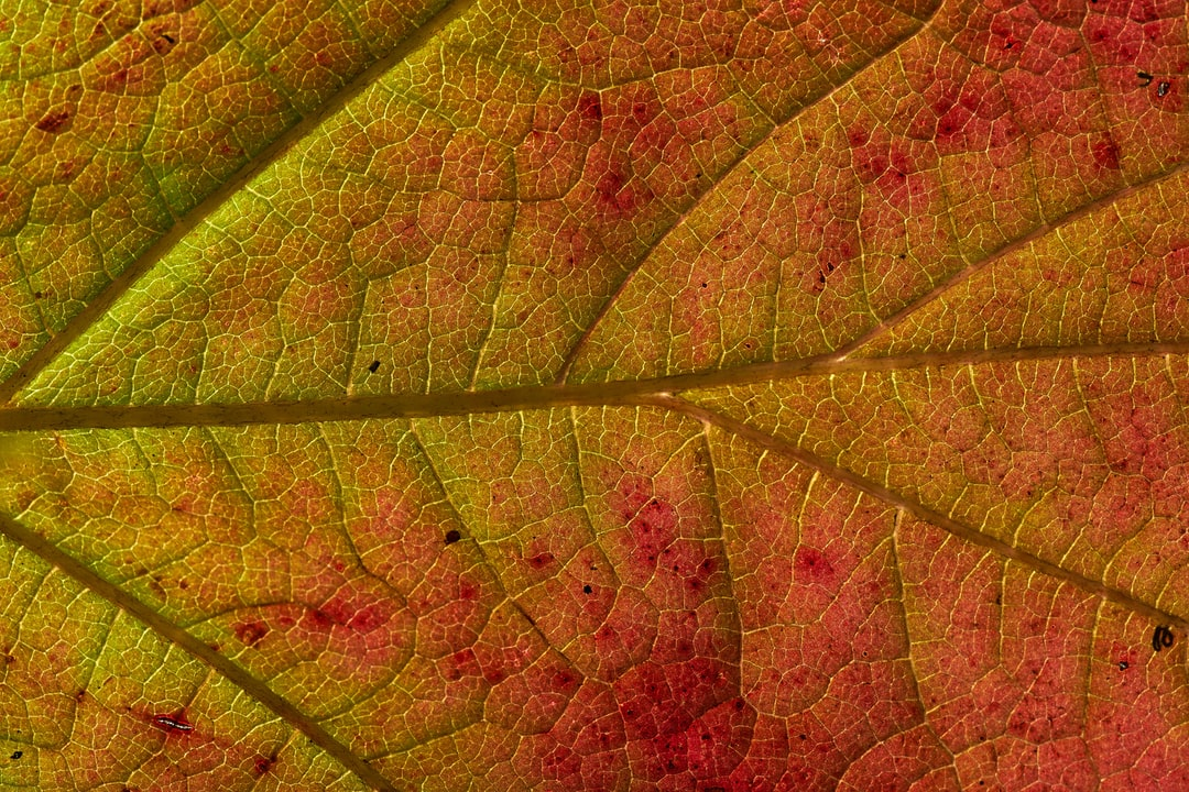 Green and Brown Leaf In Close Up Photography - unsplash