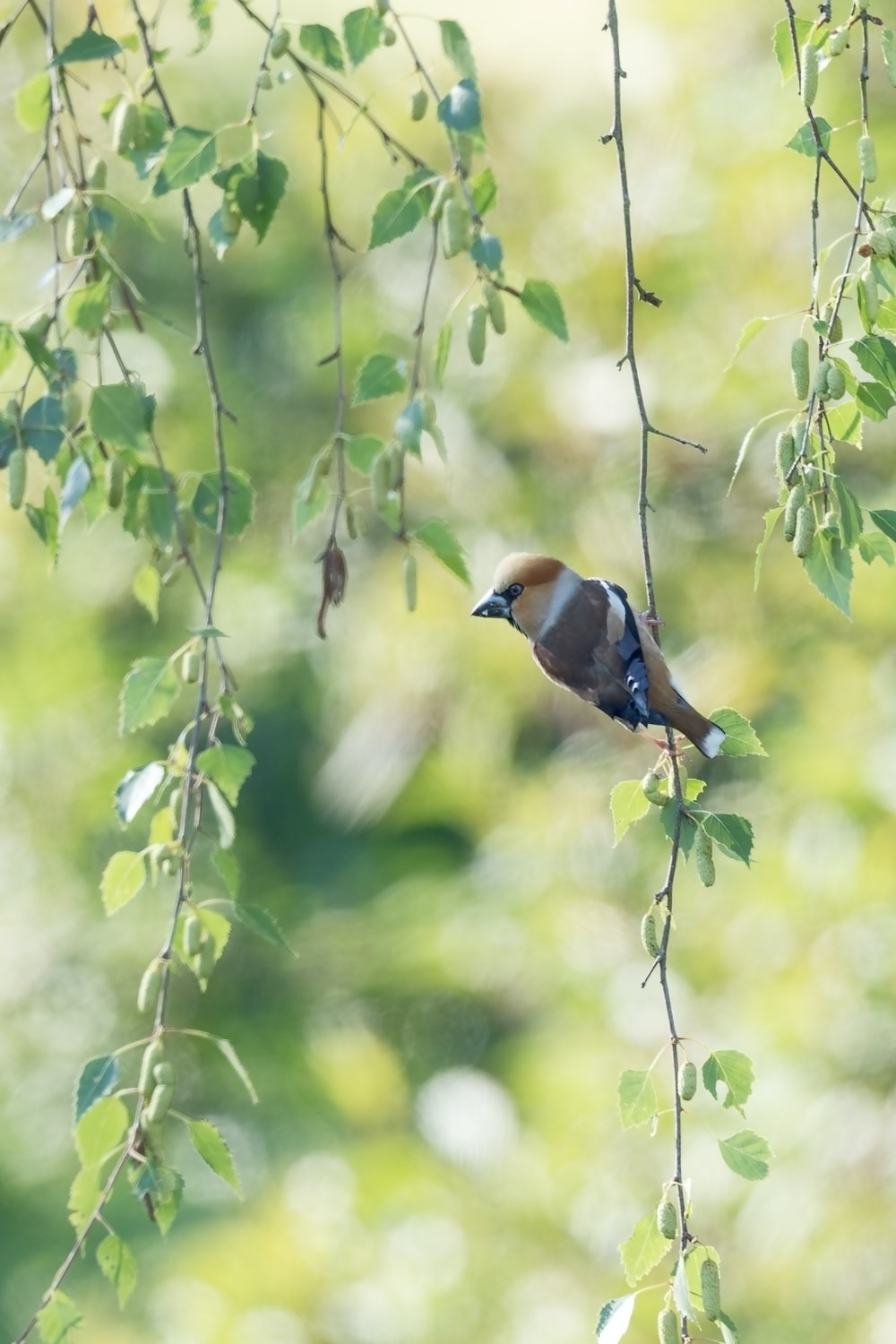 brown and blue bird on tree branch during daytime