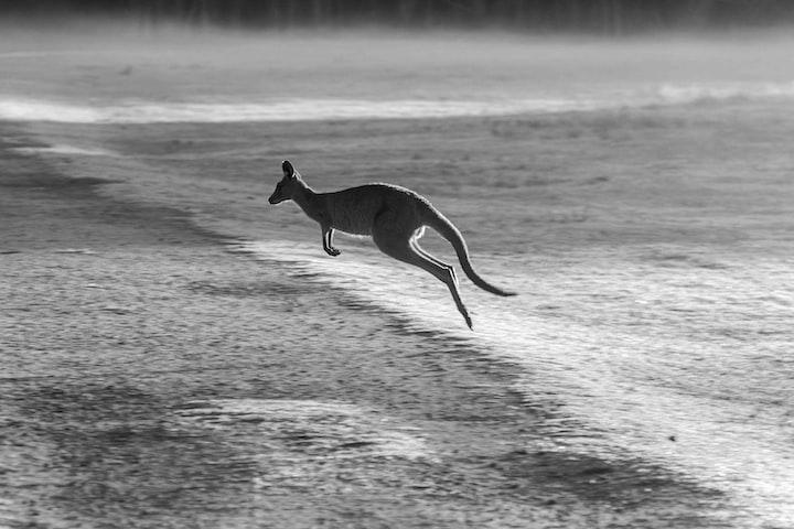 Murder in the Bush: The Kangaroo Western, or Australian Noir