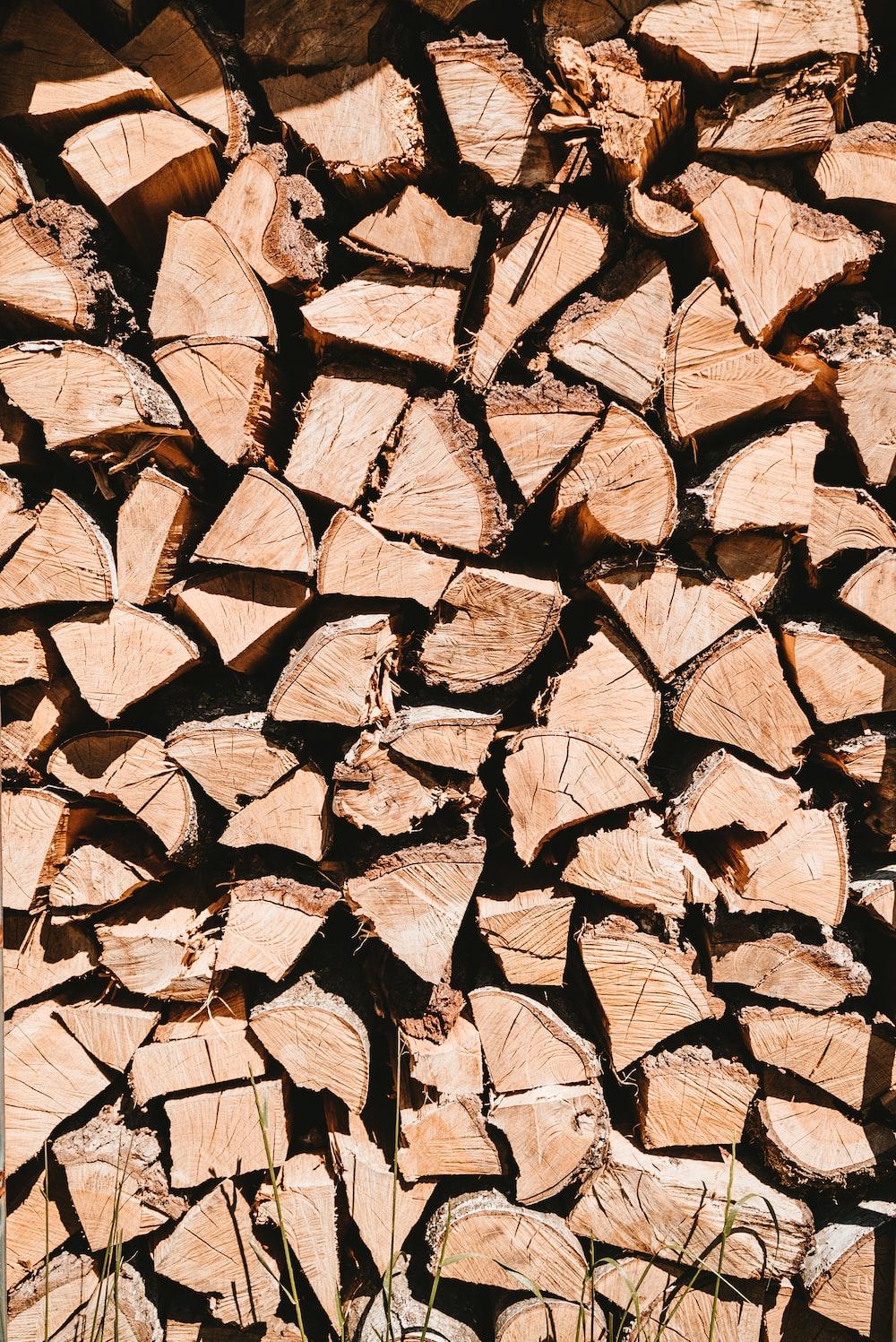 brown and black tree log