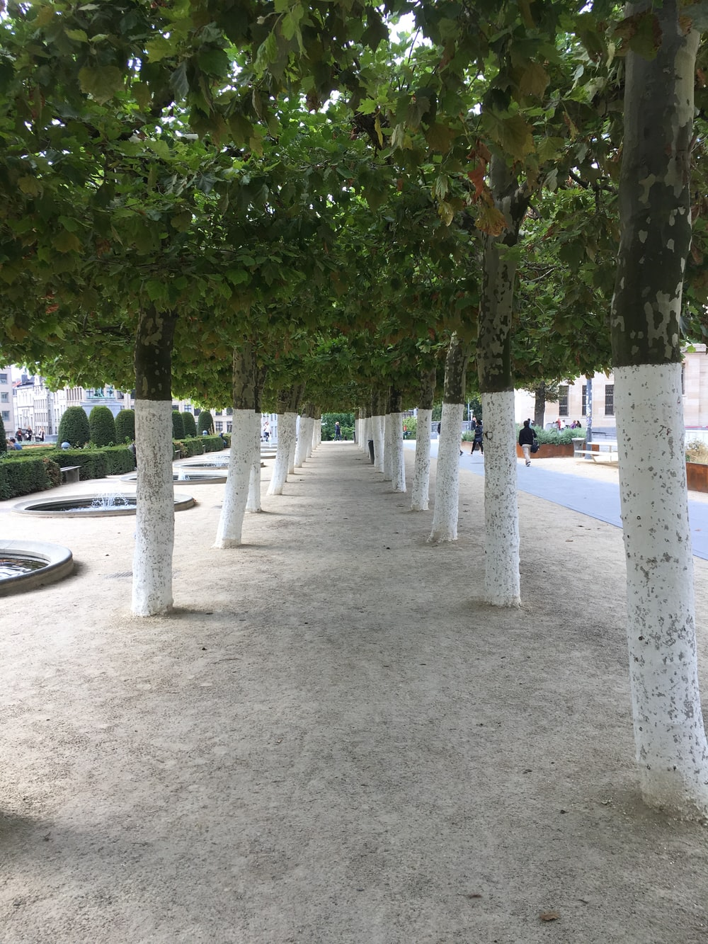 green trees on gray concrete ground during daytime