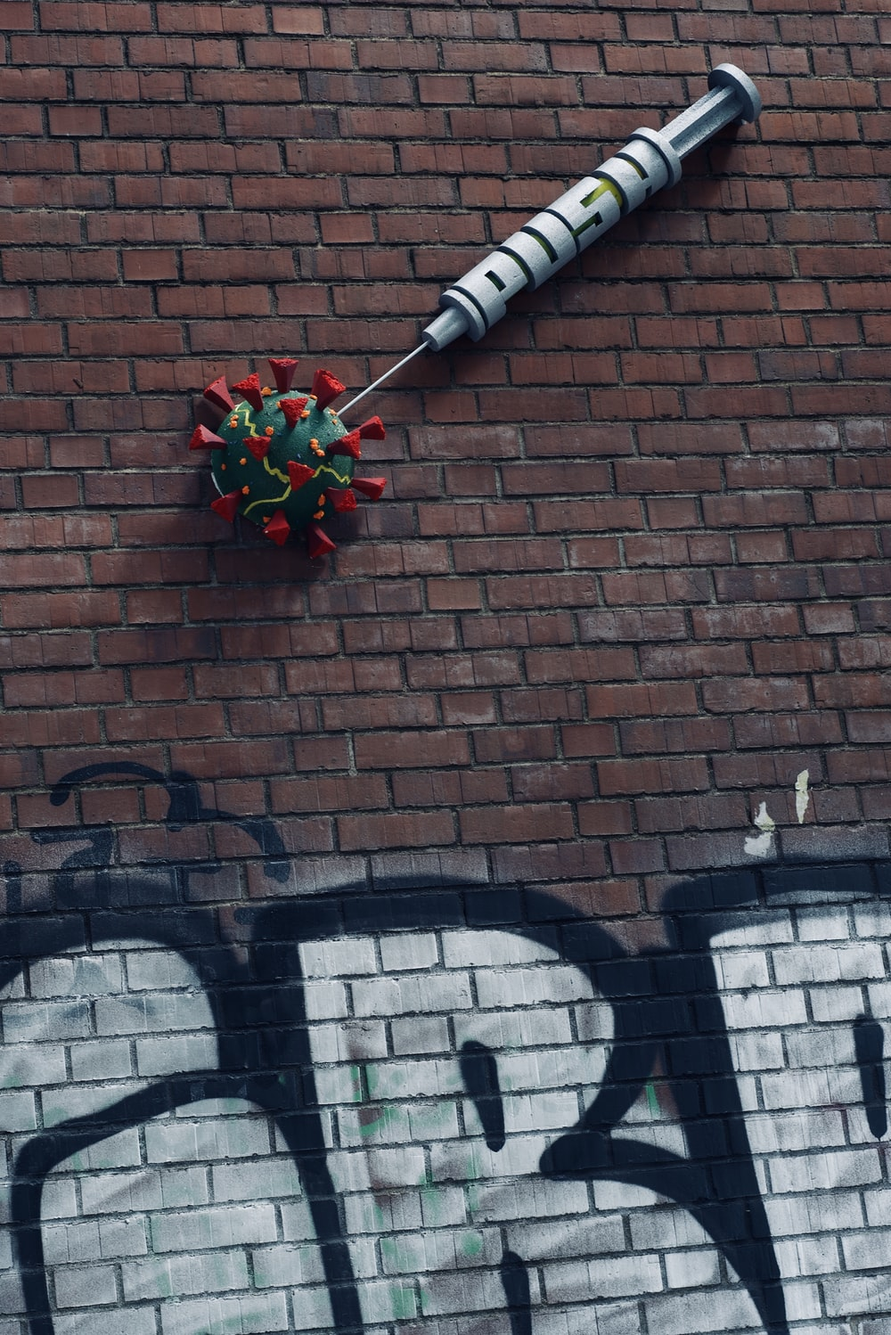 red and white rose on brick wall