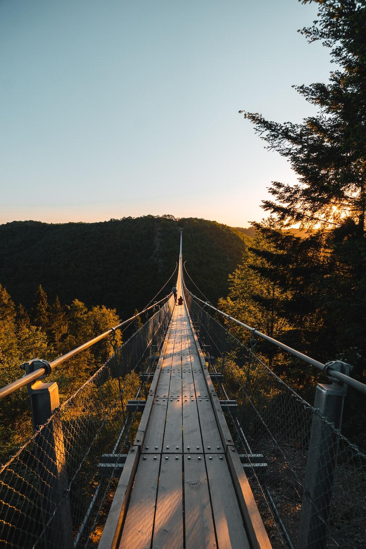 gray bridge over green trees during daytime