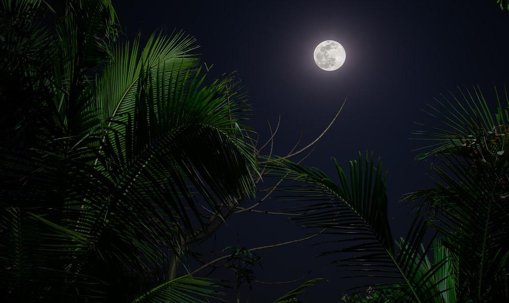 green palm tree under full moon