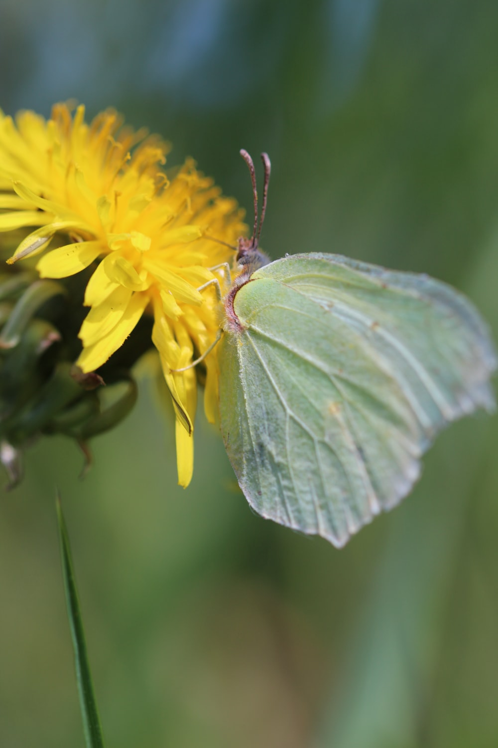 yellow butterfly perched on yellow flower in close up photography during daytime