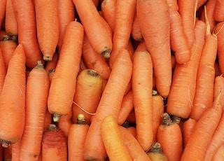 orange carrots on human hand