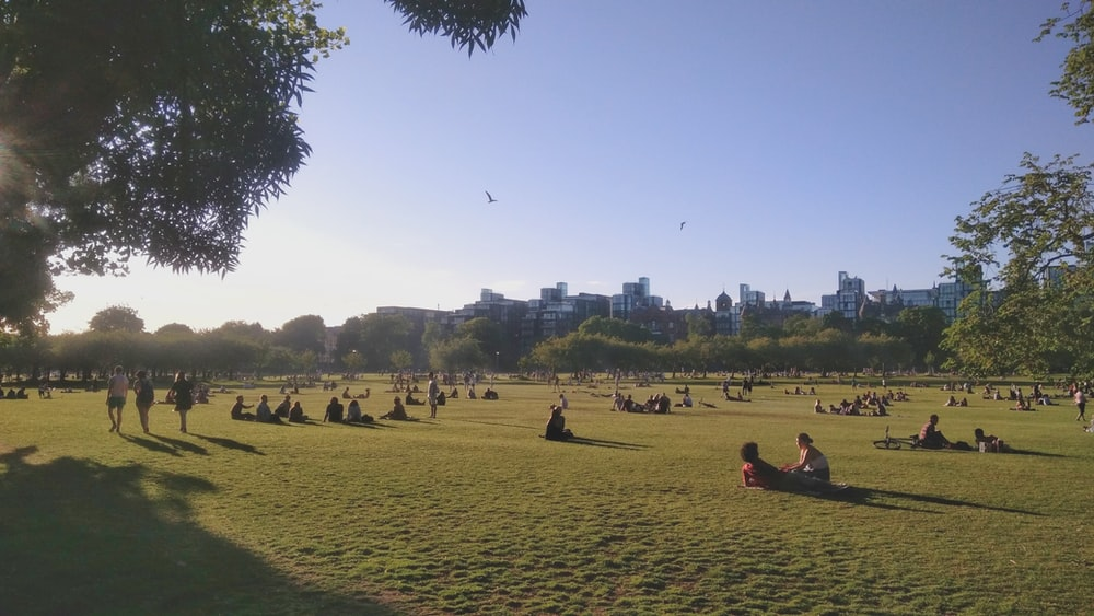 people on green grass field near body of water during daytime