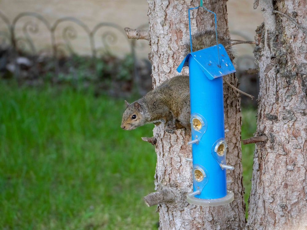 brown squirrel on blue and yellow post