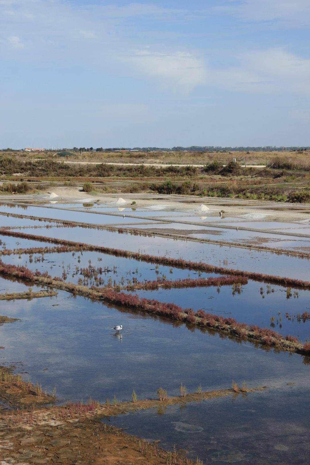 Panorama sur les marais salants d'Ars-en-Ré.