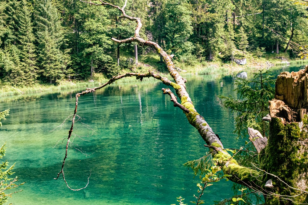 brown tree branch on green water