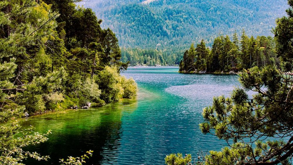 green trees beside blue lake during daytime